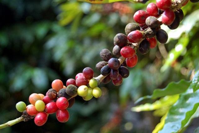 Por baja en precios del café Cuetzalan se puso a promover sus artesanías