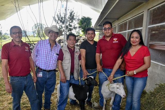 Entrega Cuautlancingo 400 cabezas de ganado ovino a familias vulnerables