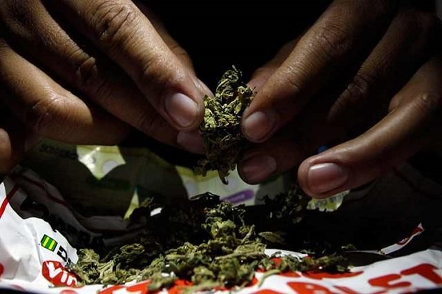 Decomisan 2, 408 dosis de cocaína y 162 plantas de mariguana en 2016