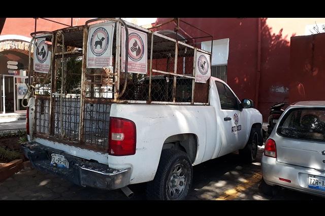Piden al ayuntamiento controlar a los perros callejeros en Atlixco
