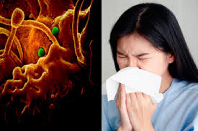 Desmienten caso de coronavirus en Teziutlán