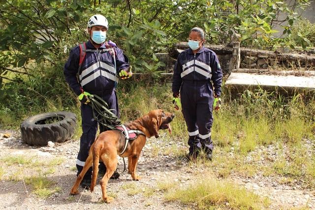 Entrenan perros para buscar a víctimas en desastres naturales