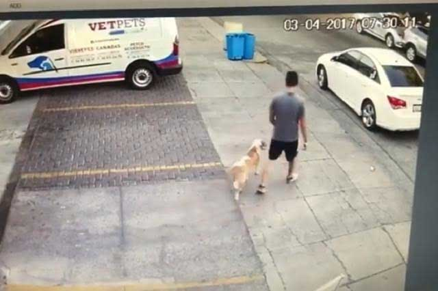 #LordAbandonaPerros Graban a joven que abandona a su mascota en la calle