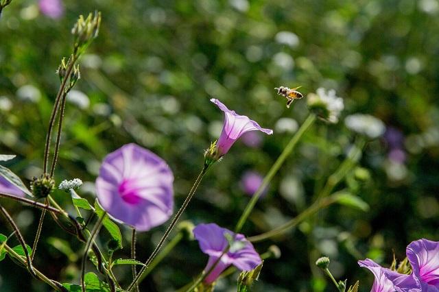 Crean abejas sin aguijón en el Colegio de Postgraduados