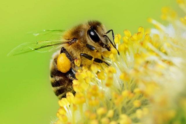 Estrategia SAGARPA para proteger abejas y fortalecer producción de miel