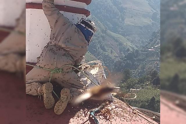 Enjambre de abejas africanas ataca a pobladores de Coyomeapan