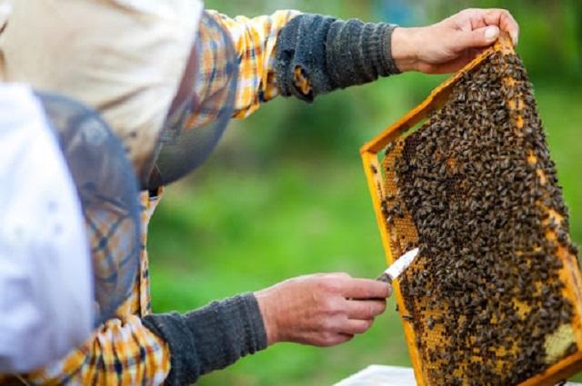 Pide legislador investigar muerte masiva de abejas en Puebla