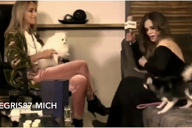 Pelea de perros interrumpe entrevista de Adela Micha a Lucía Méndez