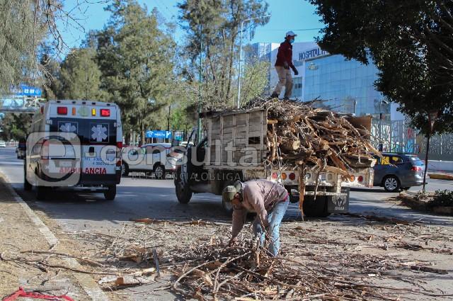 Cae árbol sobre motociclista frente al HNP