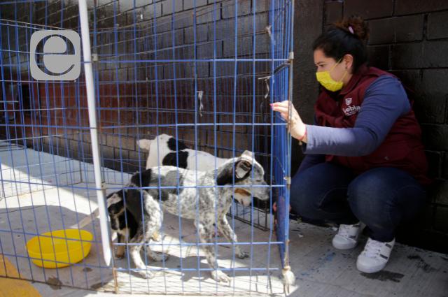 Prohíben venta de animales a menores de edad en Puebla