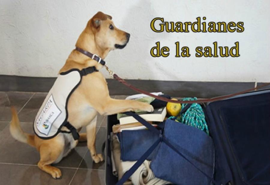 La aduana canina mexicana