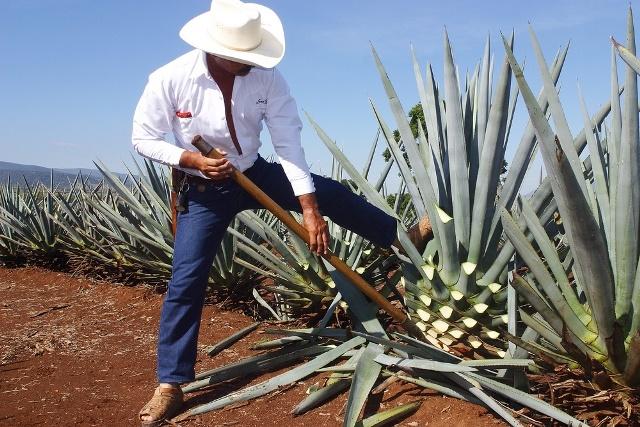 Se consolida Japón como segundo destino internacional de tequila