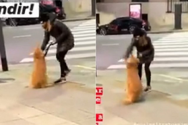 Se gana el odio de redes sociales por propinar golpiza a su perro