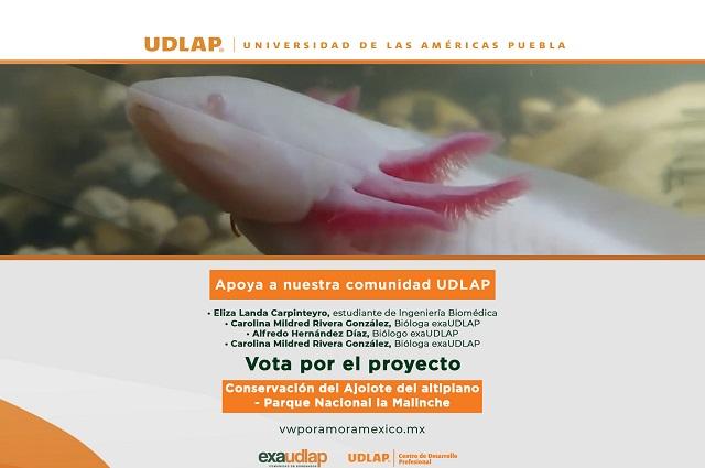 Egresada UDLAP promueve conservación del ajolote del Altiplano