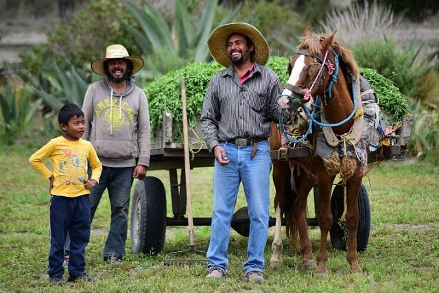 Forraje de alfalfa mejora producción de leche y queso en comunidades: Carroll