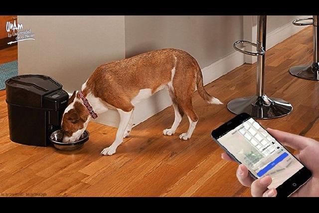 Desarrollan dosificador de alimento para perros que se activa con celular