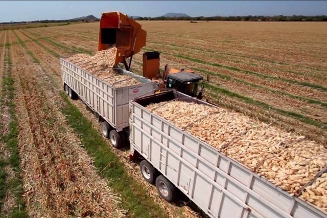 Producción de alimentos, el mayor desafío para sustentabilidad global