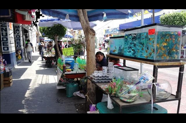 Dan tolerancia a ambulantes de Tehuacán para evitar pérdidas