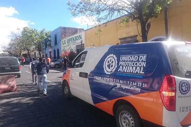 Ayuntamiento rescata perros de venta ilegal en Analco