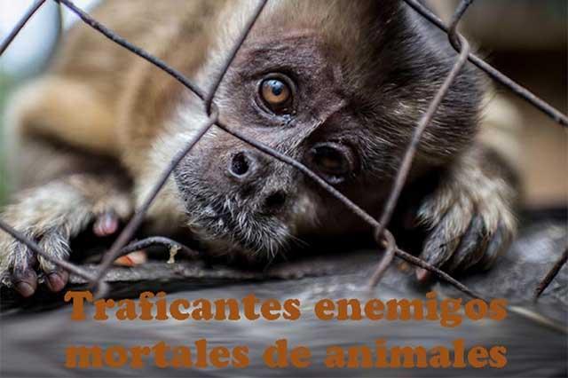 Animales en peligro por contrabando de especies