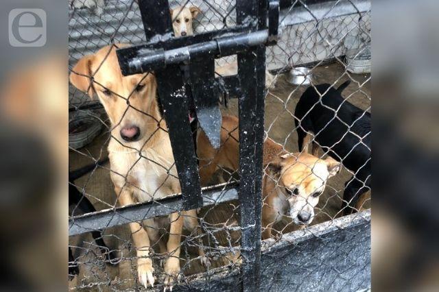 Sacrificarán a perros en Tehuacán, por cambio de administración