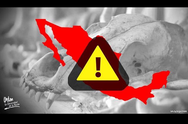 México, el país con más especies en peligro de extinción