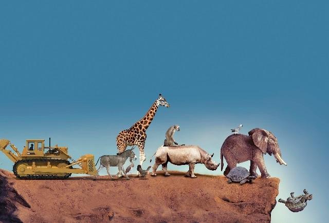 Hombre acabó en un siglo con especies que a la naturaleza le costó 10 mil años