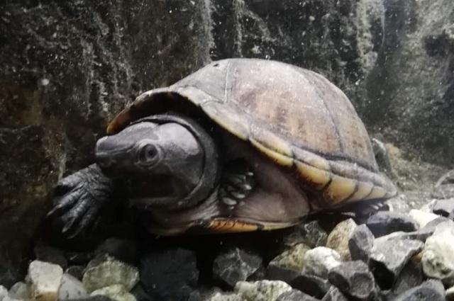 Por maltrato, animales del museo de la Evolución se trasladan a Flor del Bosque