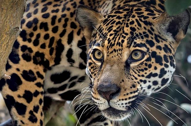 30% de especies silvestres estarían en peligro de extinción