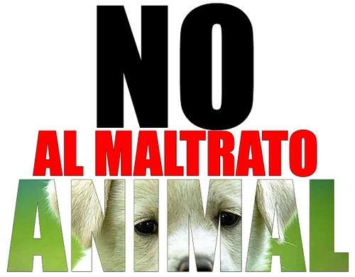 Temen activistas sacrificio masivo de perros en Protección Animal municipal