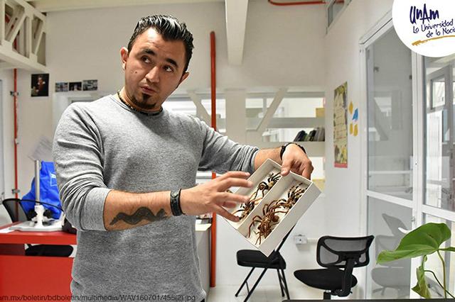 Descubren en Puebla nueva especie de araña violinista