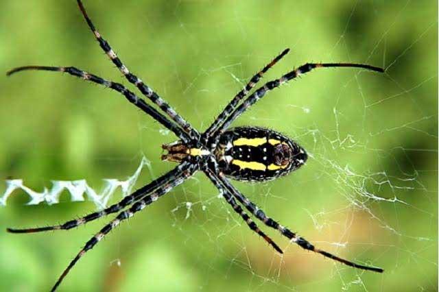 Después de leer esto sabrás por qué no debes de matar a las arañas
