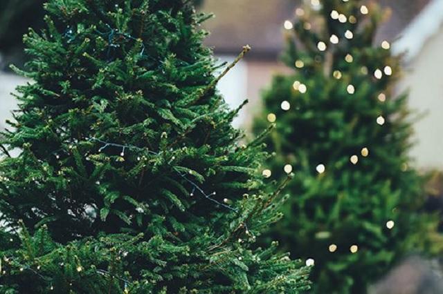 Series y árboles de navidad baratos podrían incendiar tu casa