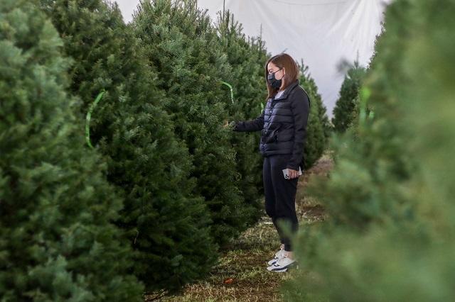 Cómo lograr que tu árbol natural de Navidad se mantenga fresco