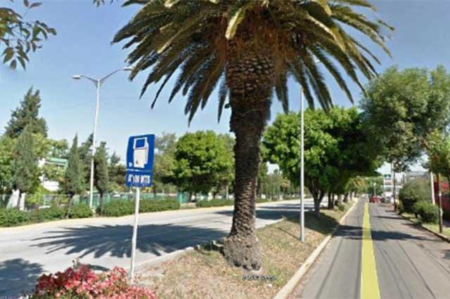 En riesgo 378 árboles en la Hermanos Serdán por Ciclovía