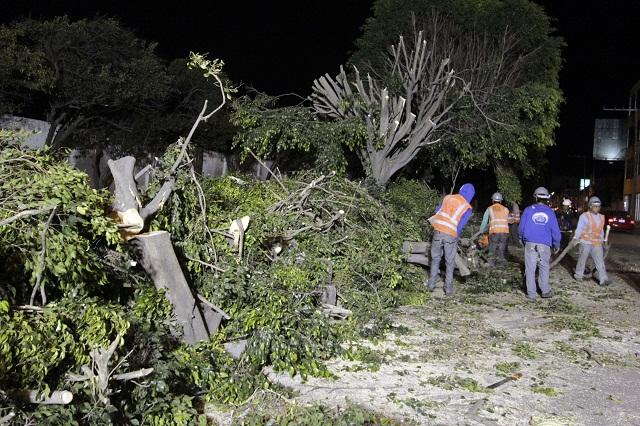 Aumentará costo de dictámenes sobre árboles en riesgo por obras