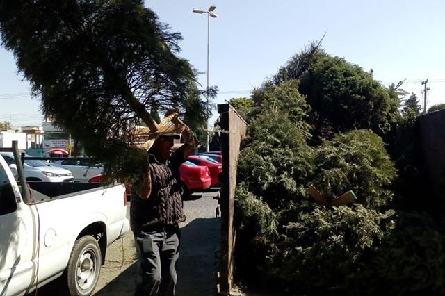 Invitan a reciclar árboles navideños y ganar boletos para Africam Safari