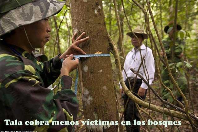 Menos árboles, pero también disminuye la deforestación mundial