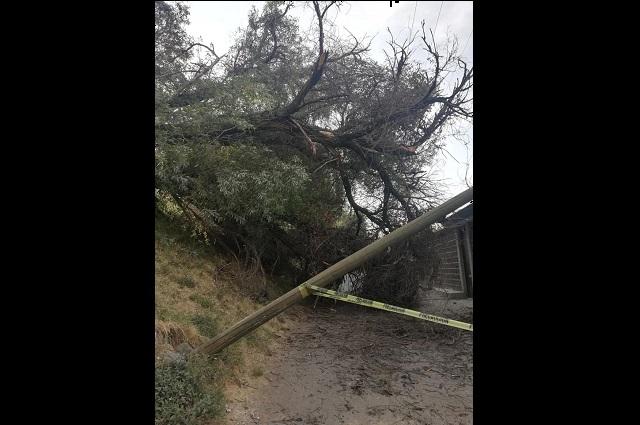 En Atlixco existen 50 árboles de riesgo para la ciudadanía