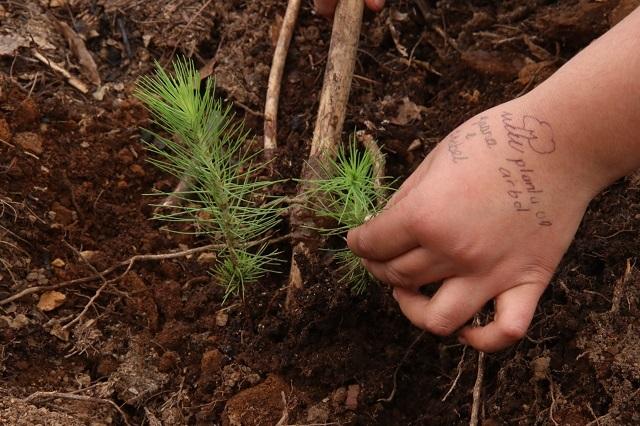Siembran 500 árboles en el Parque Ecológico