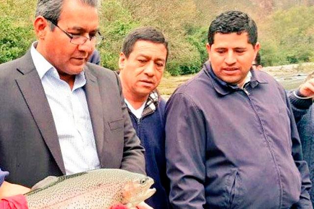 Siembra Sagarpa trucha arcoiris para repoblar el Río Apulco