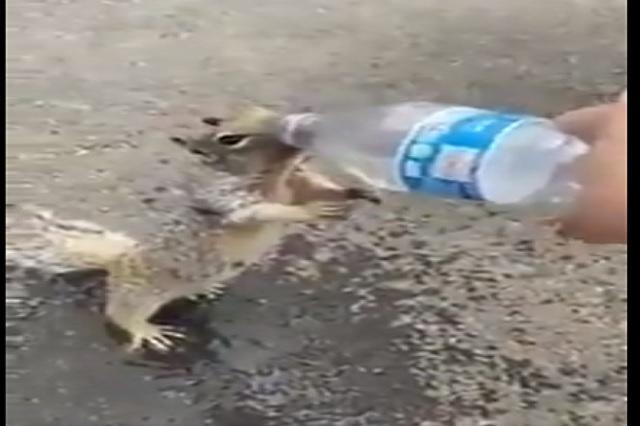 Video: Ardilla pide agua a joven y se hace viral