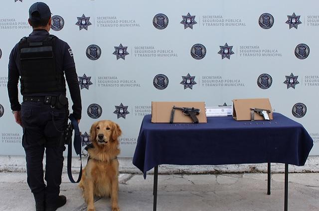 Detecta perro policía 2 armas de fuego en la Central de Autobuses