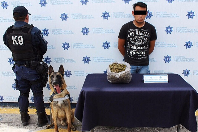 Aseguran a sujeto en la CAPU con más de un kilo de marihuana