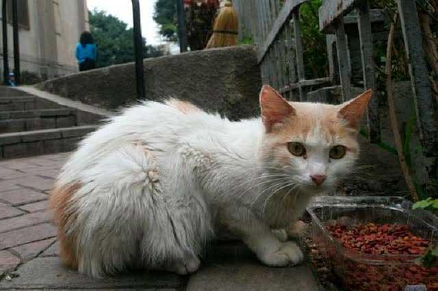 Asesinato en serie de gatos pone en alerta a la policía francesa