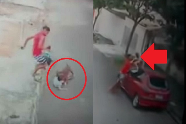 Captan violento ataque de un Pitbull a niño de 5 años; así lo rescataron