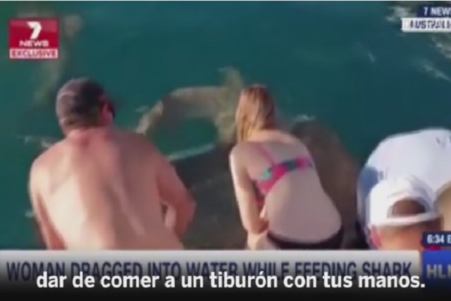 Un tiburón arrastra a mujer que intentaba alimentarlo