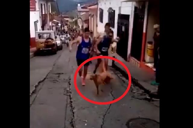 Video: Atleta patea a un perro y marca deportiva retira patrocinio