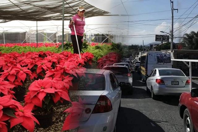 Turistas saturan Atlixco por venta de flor de Nochebuena