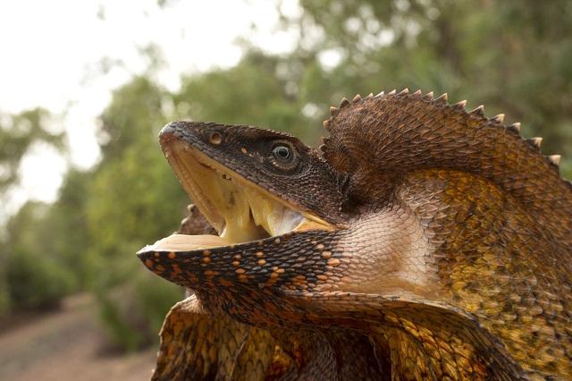 Animal Planet muestra lo hermoso que es Australia y la situación que vive